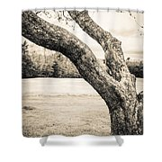 Meet Me Under The Old Apple Tree Shower Curtain