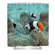 Meet The Nemo Family Shower Curtain