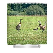 Meeting Of The Cranes Shower Curtain