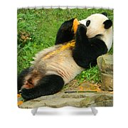 Mei Xiang Chowing On Frozen Treat Shower Curtain