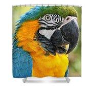 Mele E Manono Ia Ea Macao Tropical Birds Of Hawaii Shower Curtain