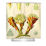 Melera Shower Curtain