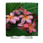 Melia Hae Hawaii Pink Tropical Plumeria Keanae Shower Curtain