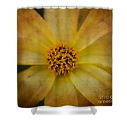 Mellow Yellow  2 Shower Curtain