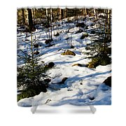 Melting Snow In A Forest In Late Winter Shower Curtain