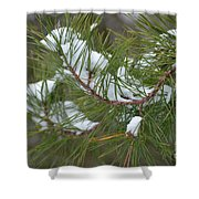 Melting Snow In The Pines Shower Curtain