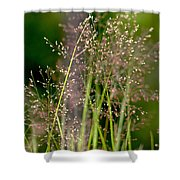 Memories Of Springtime Shower Curtain