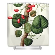 Menispermum Shower Curtain