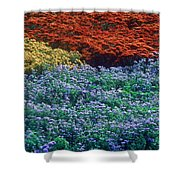 Merging Colors Shower Curtain