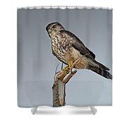 Merlin Falcon Shower Curtain