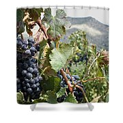 Merlot Ready Shower Curtain