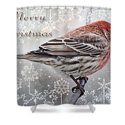 Merry Christman Finch Greeting Card Shower Curtain