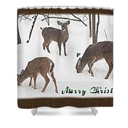 Merry Christmas Card - Whitetail Deer In Snow Shower Curtain