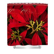 Merry Christmas - Poinsettia  - Euphorbia Pulcherrima Shower Curtain