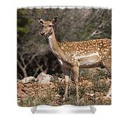 Mesopotamian Fallow Deer 2 Shower Curtain