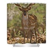 Mesopotamian Fallow Deer 3 Shower Curtain