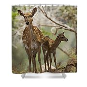 Mesopotamian Fallow Deer 4 Shower Curtain