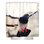 Messenger Of Love. Pink Spring In Amsterdam Shower Curtain