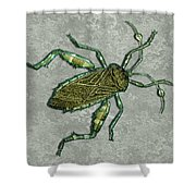 Metallic Green And Gold Prehistoric Insect  Shower Curtain