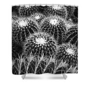 Mexican Golden Barrel Cacti Shower Curtain