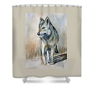 Mexican Grey Wolf Shower Curtain