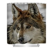Mexican Grey Wolf Upclose Shower Curtain