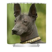 Mexican Hairless Dog Shower Curtain