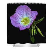 Mexican Primrose On Black 2 Shower Curtain