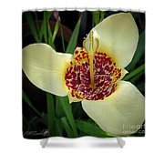 Mexican Shell Flower Shower Curtain