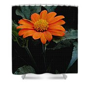 Mexican Sunflower Shower Curtain