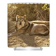 Mexican Wolf Close Up Shower Curtain
