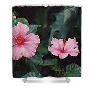 Mexico Pink Beauties By Tom Ray Shower Curtain