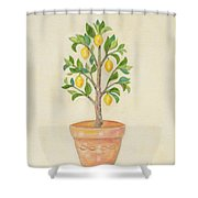 Meyer Lemon Tree Shower Curtain