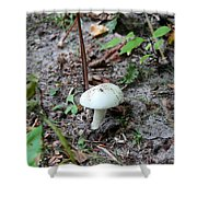 Michigan Fungus 3 Shower Curtain