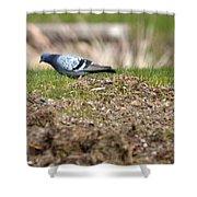 Michigan Rock Pigeon Shower Curtain