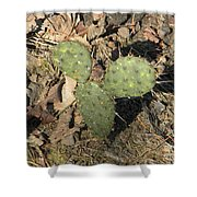 Mickey Mouse Cactus Shower Curtain