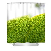 Micro Leaf Shower Curtain