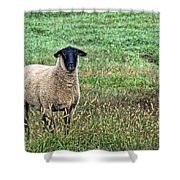 Middle Child - Blackfaced Sheep Shower Curtain