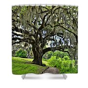 Middleton Place Oak  Shower Curtain
