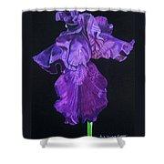 Midnight Iris Shower Curtain