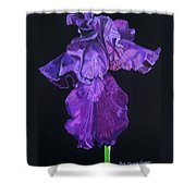 Midnight Iris Shower Curtain