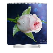 Midnight Rose Shower Curtain