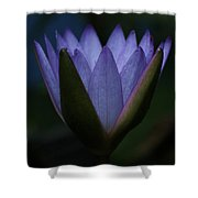 Midnight Water Lily Shower Curtain