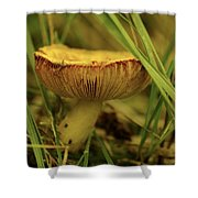 Midway Mountain Morsel 2 Shower Curtain