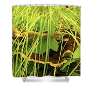 Midway Mountain Morsels 5 Shower Curtain