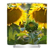 Midwives Shower Curtain