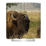 Mighty Bison Shower Curtain