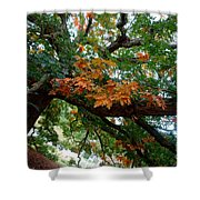 Mighty Fall Oak #1 Shower Curtain