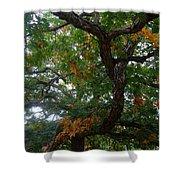 Mighty Fall Oak #2 Shower Curtain