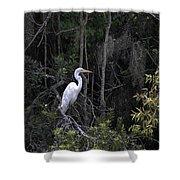Mighty Heron Shower Curtain